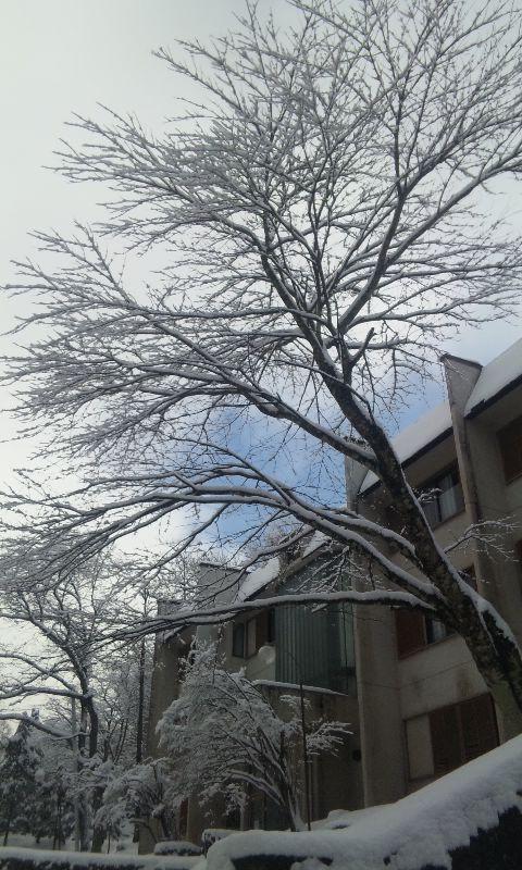 100218_雪