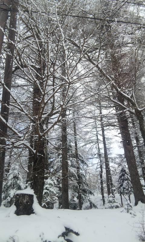 100218_雪.2