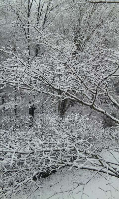 100326_雪