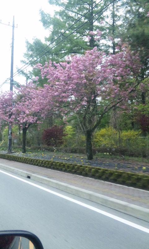 100512_桜