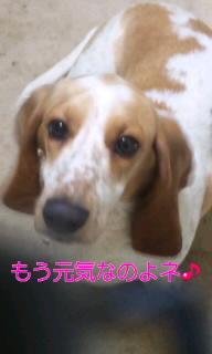 100630_姫