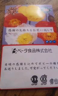 101106_タネ