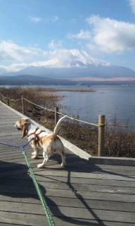 101130_富士山