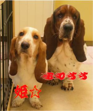 BOSS&姫2