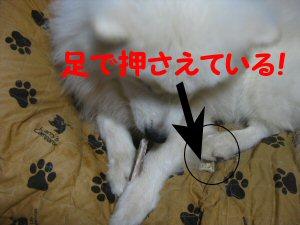 blog0382.jpg