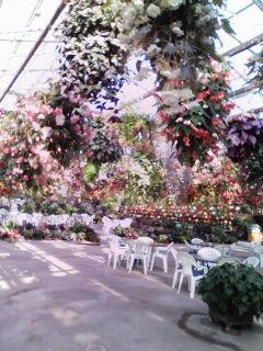 フォーゲル花
