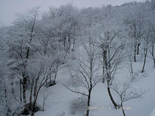 06 樹氷1