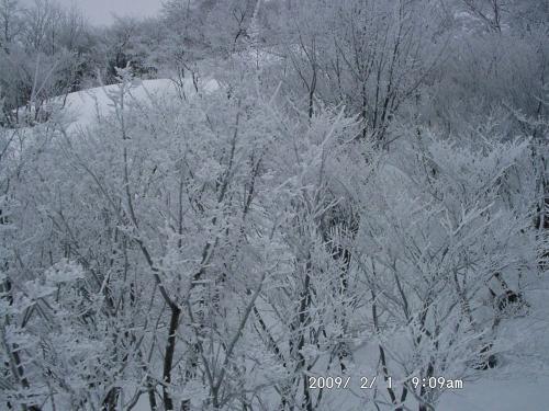 07 樹氷2