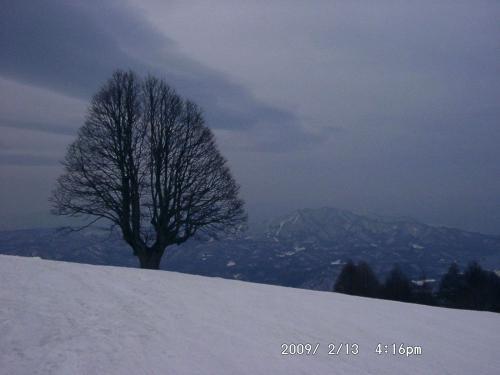 03 杉の原スキー場のシナノキ