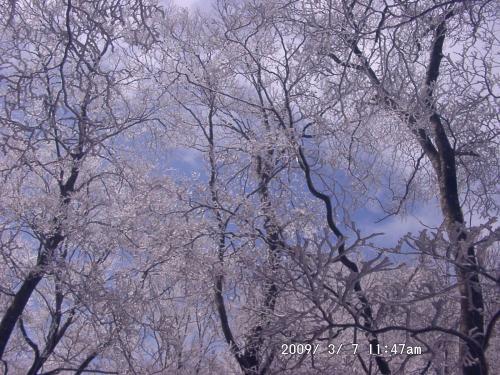 06 霧氷03
