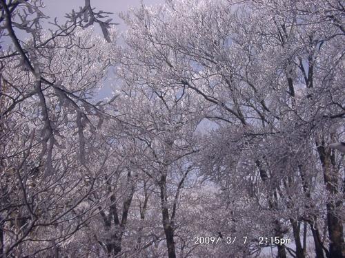 11 霧氷