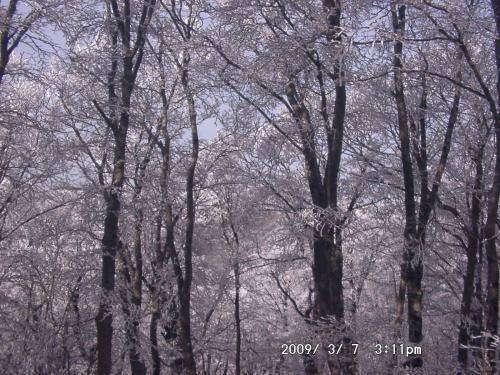 13 霧氷