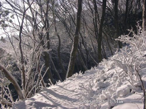 03 自然林の明るい道