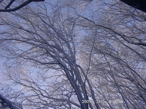 05 自然林の樹氷