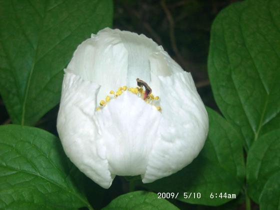 01 この花の名は