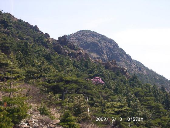 10 岩峰とツツジ2