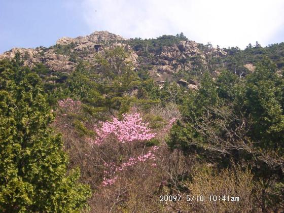 09 アケボノツツジと岩峰