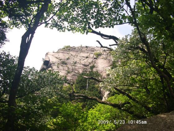 15 岩とシロヤシオ