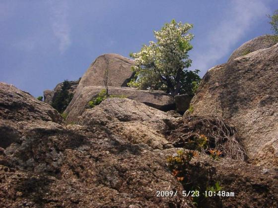 16 岩とシロヤシオ