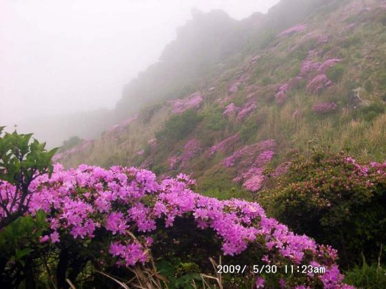 07 東峰のミヤマキリシマ