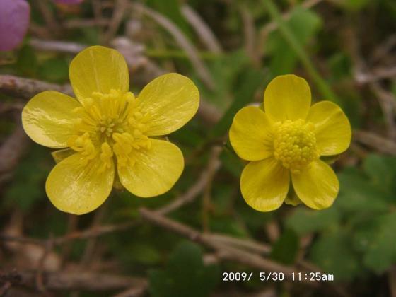 08 黄色い花