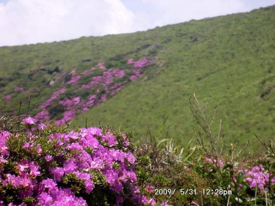 05 杵島岳のミヤマキリシマ