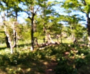 09 ブナの疎林