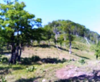 08 古田の森