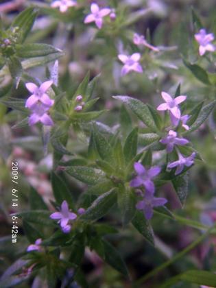 09 小さな花