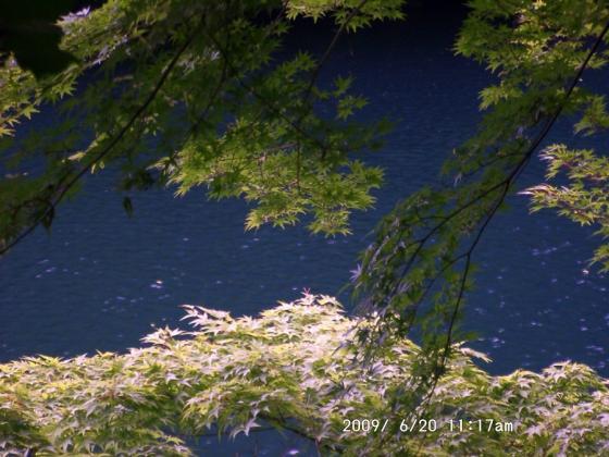08 楓と湖水