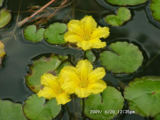 13 黄色い花