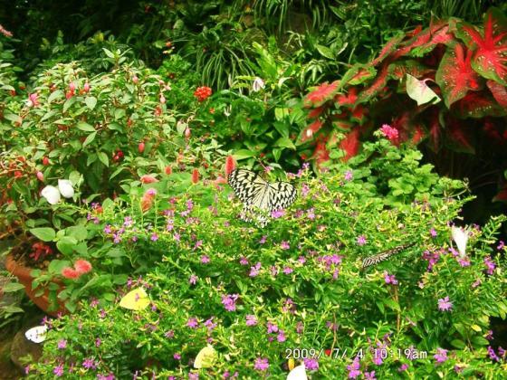 05 花とチョウ