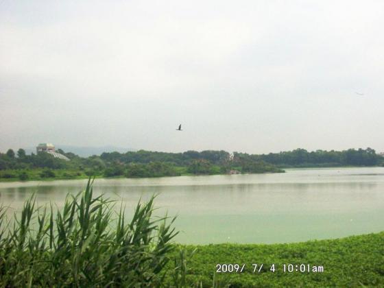 01 昆陽池と昆虫館