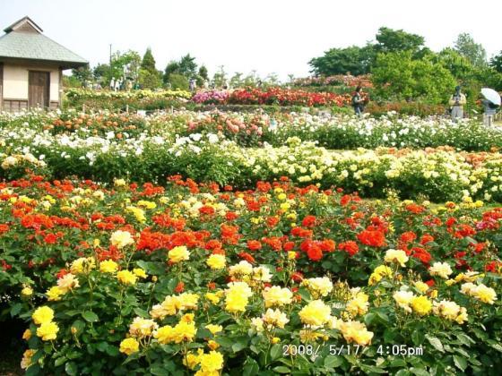 05  浜寺公園庭園4