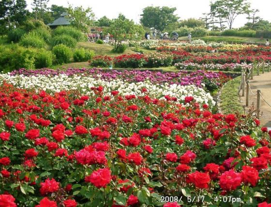 06 浜寺公園庭園5