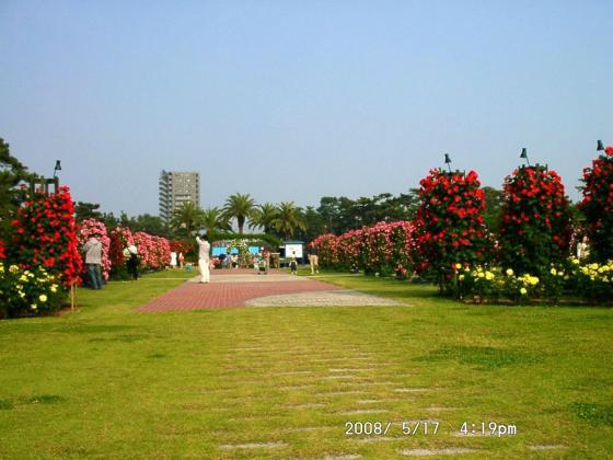 08 浜寺公園バラ園2