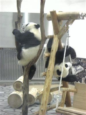 双子のパンダ兄弟