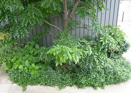 菱屋2008-2