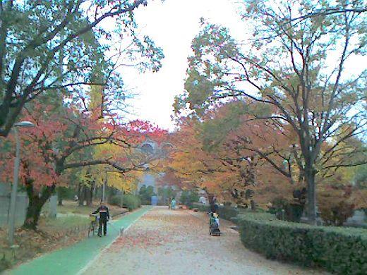 真田山公園1128