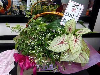 ラーメン二郎守谷(開店祝いの花)