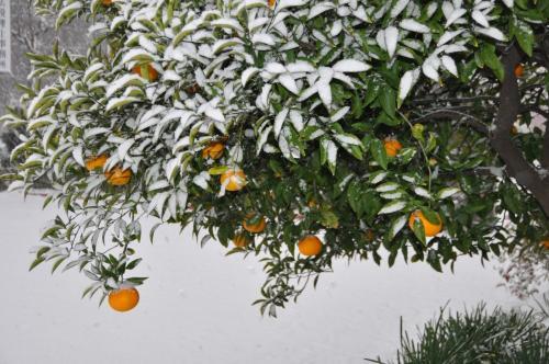 少し雪が降りました