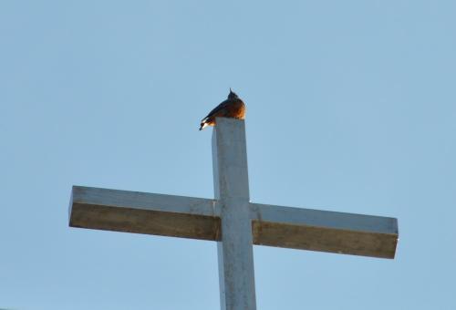 鳥と十字架