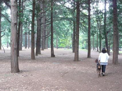 代々木公園#2