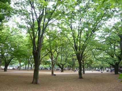 代々木公園ドックラン(中・大型犬用)