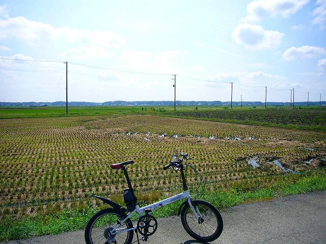 0809  印旛沼ポタ 035