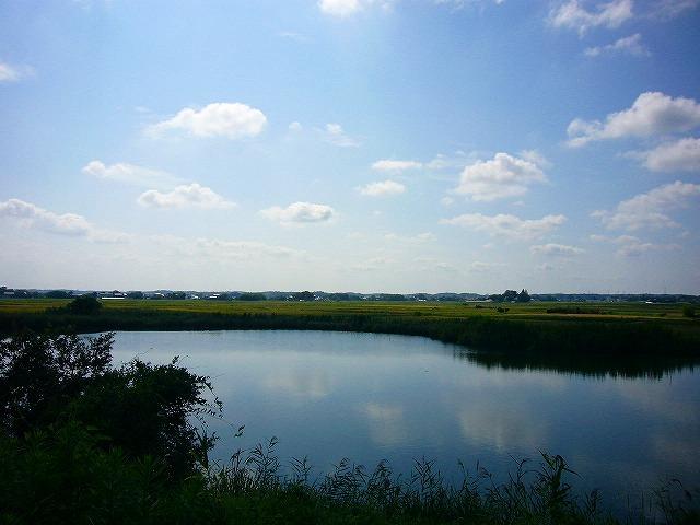 0809  印旛沼ポタ 043