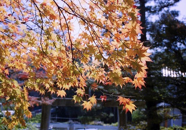 無題-スキャンされた画像-京都西山05