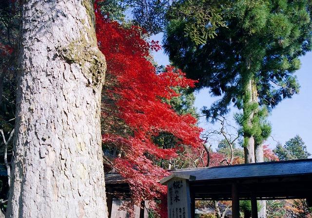 無題-スキャンされた画像-京都西山07