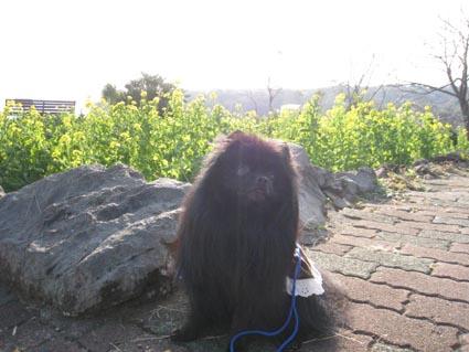 200812-izu_0292-1.jpg