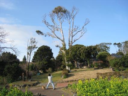 200812-izu_0301-1.jpg